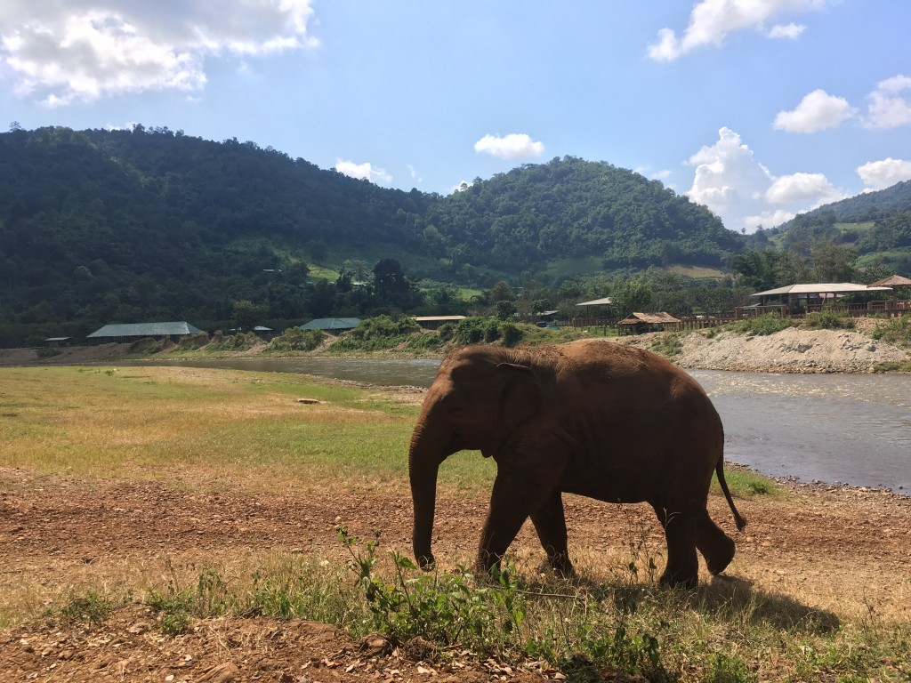 Visiting elephants in Chiang Mai, Thailand