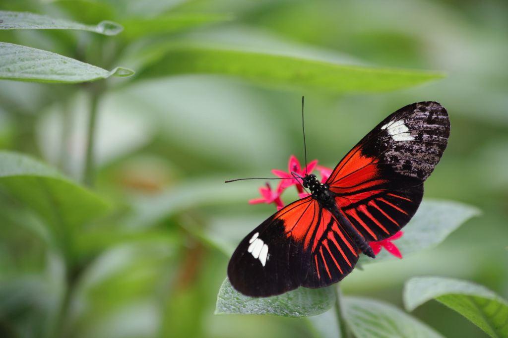 Banteay Srey Butterfly Centre in Siem Reap, Cambodia